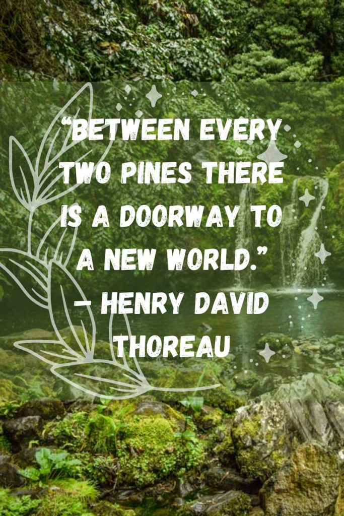 Quotes about hiking and nature