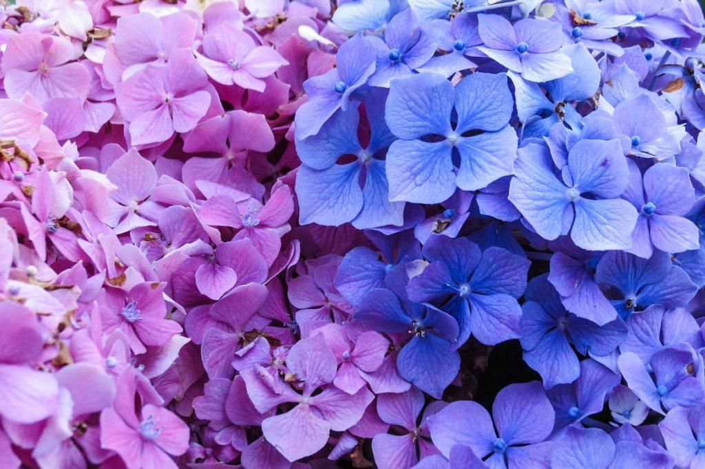 Flowers Ponta Delgada Sao Miguel